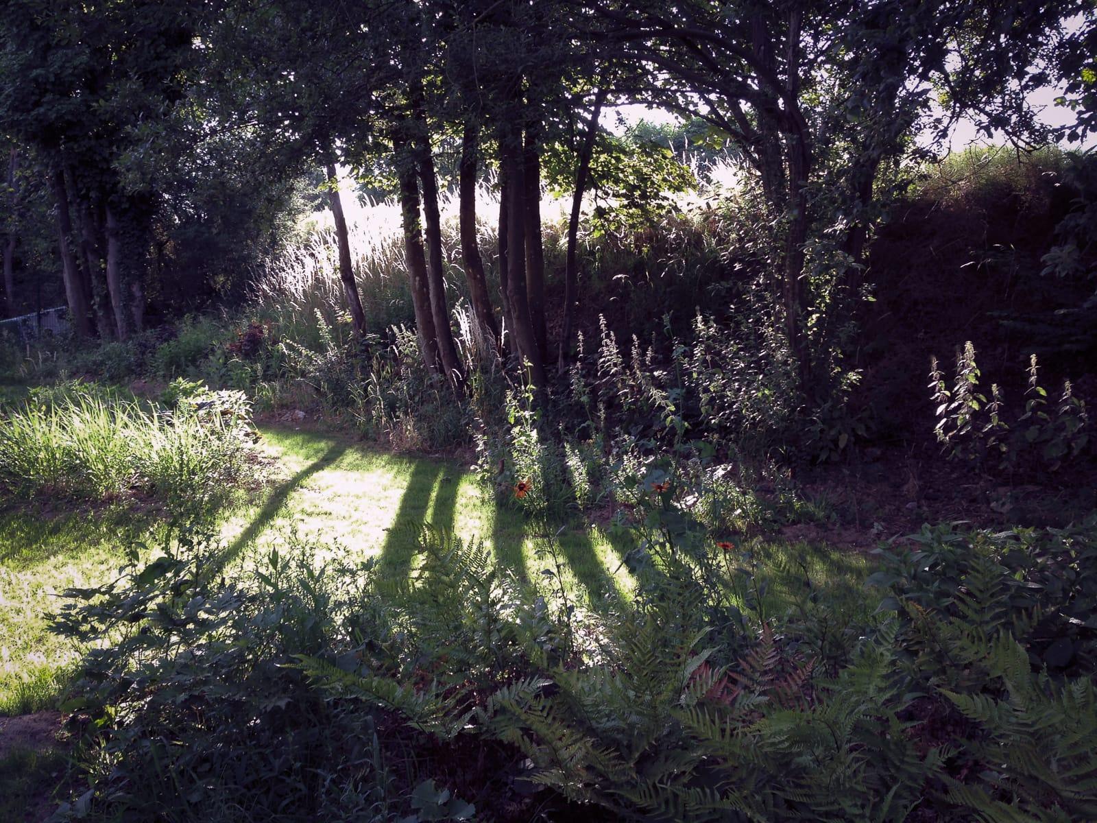 jardin lisière vivaces Roche Bobois coignières ®Hermelinecarpentier Jeanne Roche