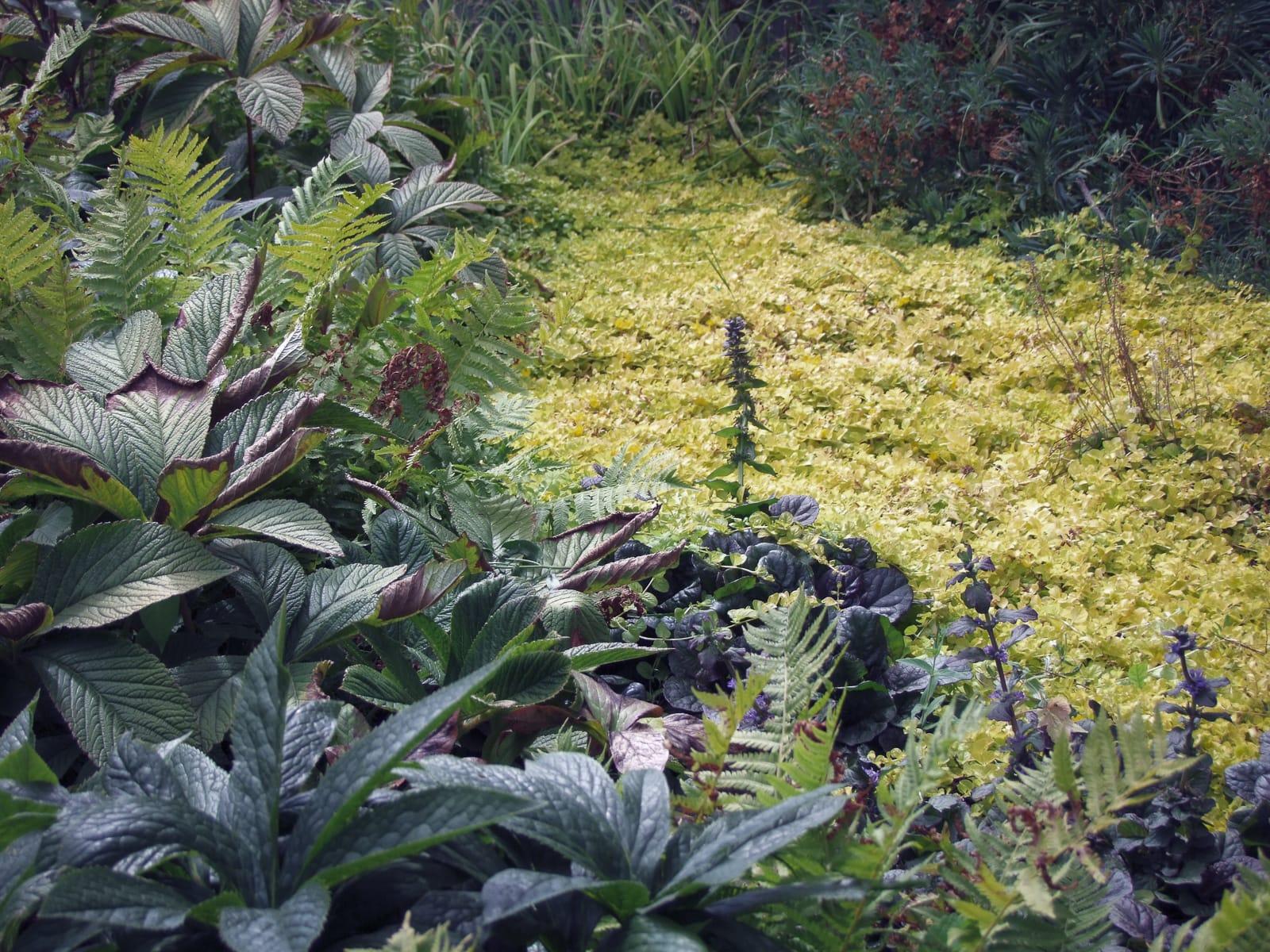 jardin lisière vivaces Roche Bobois coignières ®Hermelinecarpentier