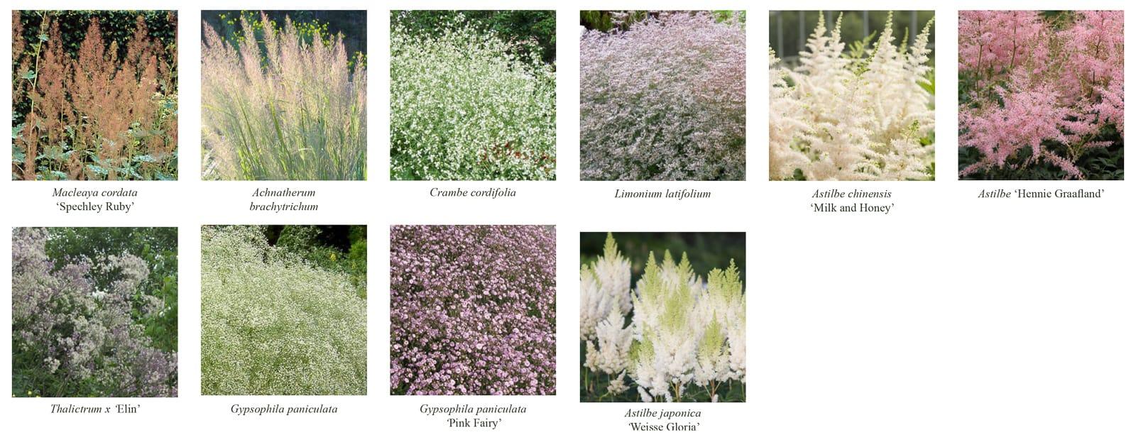 jardin peter pan vue palette botanique ®Hermeline carpentier