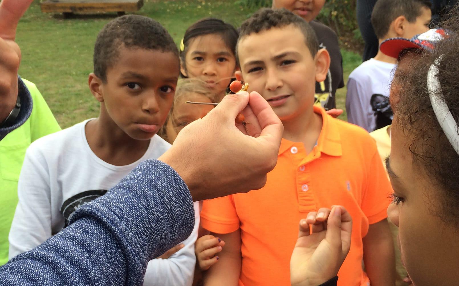Reconnaissance botanique les enfants du patrimoine un jardn dans ma main CAUE 94®Hermeline carpentier