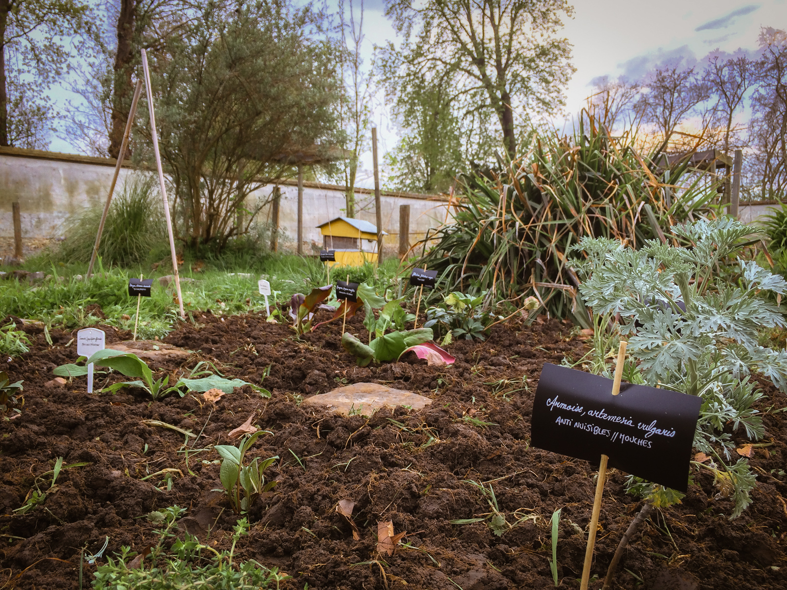 jardin de simple pour les poules Picorama