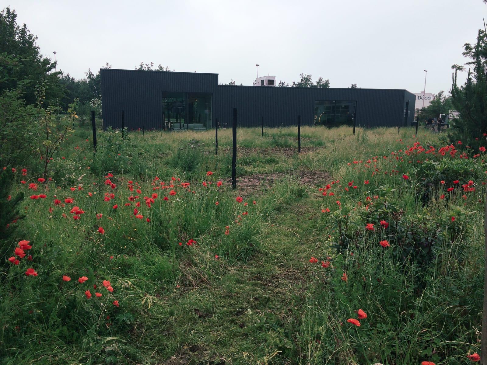 Prairie spontanée + semis plantes indigènes Élevation prairie vs zac jardin naturaliste ®Hermeline Carpentier