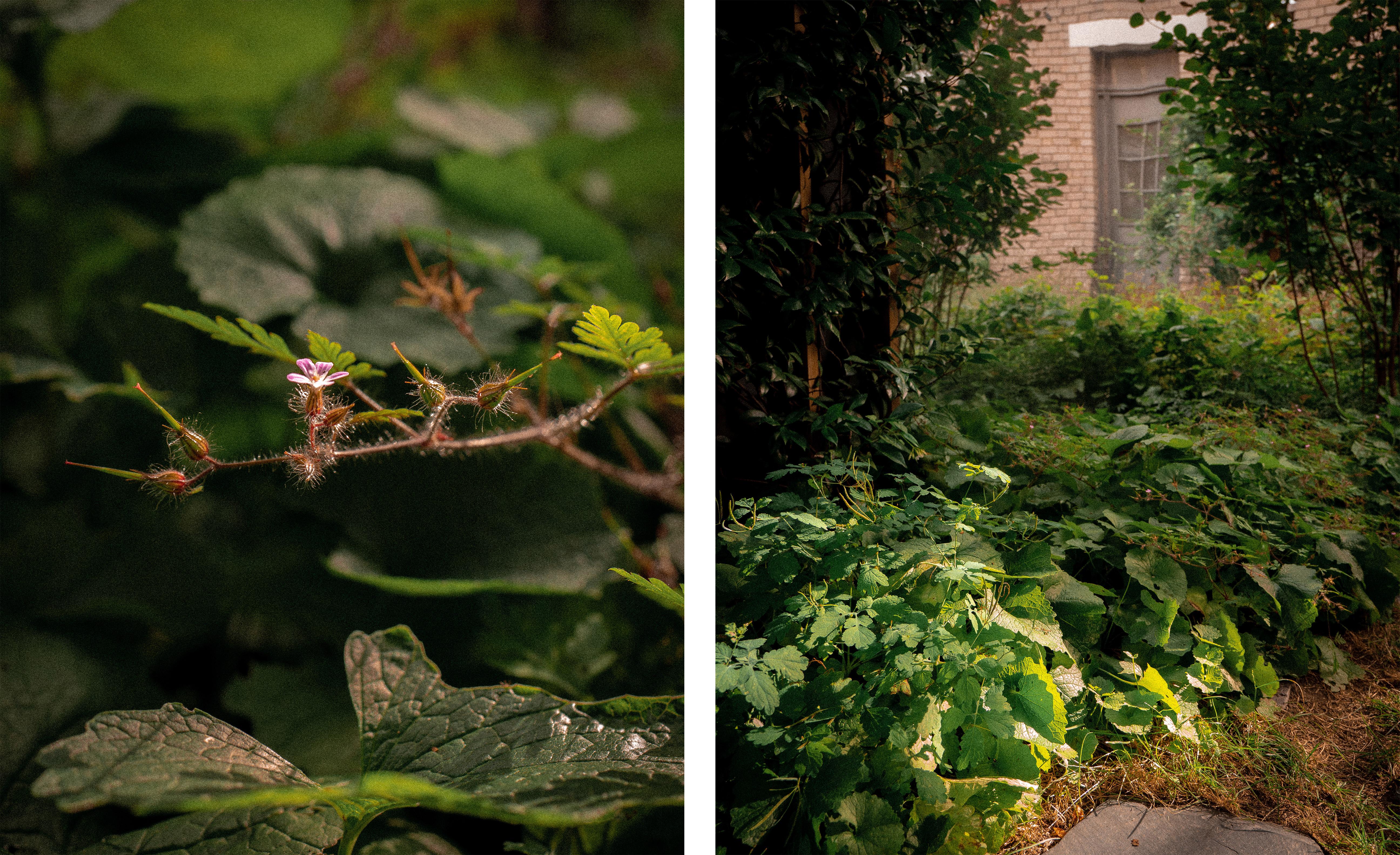 02_Jardin-infini-à-chatillon-Paysagiste-Hermeline-Carpentier-©photo-Anthony-Marques