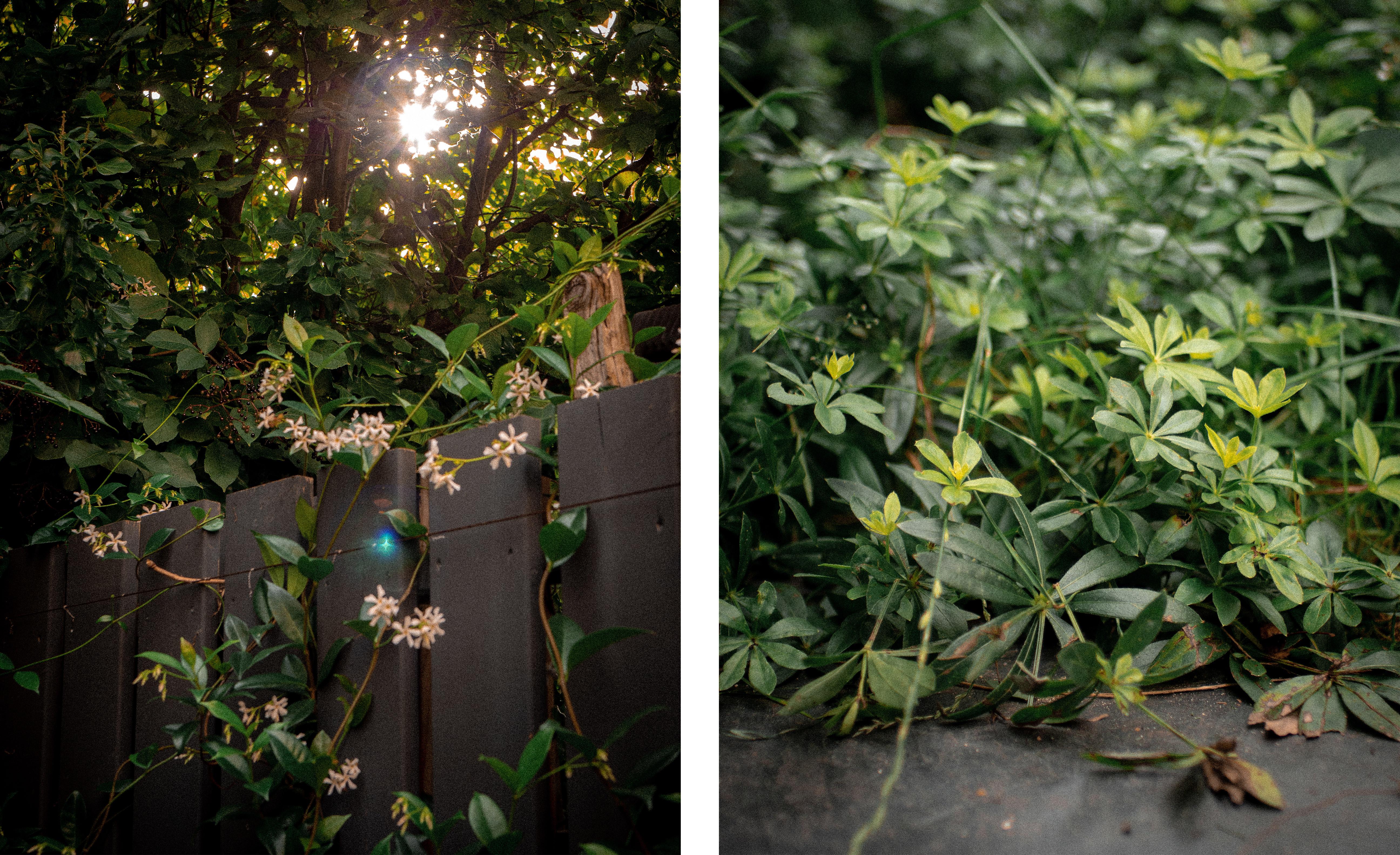 08_Jardin-infini-à-chatillon-Paysagiste-Hermeline-Carpentier-©photo-Anthony-Marques